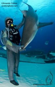 Cristina Zenato hypnotizes Reef Shark