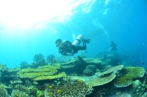 Sidemount Diving in Galela Underwater Volcano