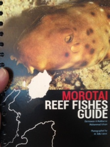Morotai Reef Fishes Guide
